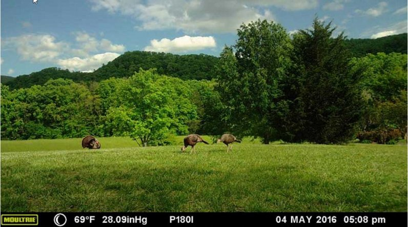 Panoramic Hunting camera Moultrie P-180i