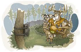 Korisni savjeti vlasnicima lovačkih kamera. Dio 1.